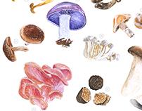 Edible Funghi