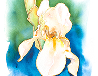 Iris Watercolor With Gold Leaf