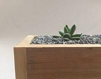 Frailea // Lámpara