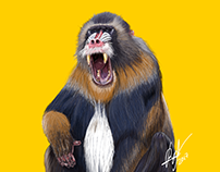 Mandrill illustration