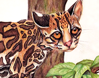 Leopardus Weidii