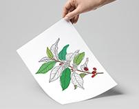 Planta de café, ilustración