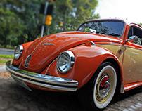 Old Beetles from Porto Alegre, Brazil.