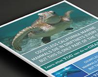 Turtle Island Restoration Online Banners