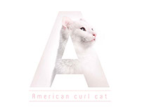 Cat breeds with typography