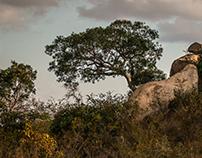 Kruger National Park, South Africa !