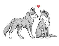 Wild Heart Series | Valentine's Day Cards