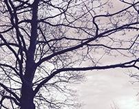 Naked Trees 1