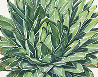 'Queen Victoria' Agave - Watercolor