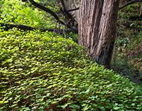 Limekilm State Park, CA