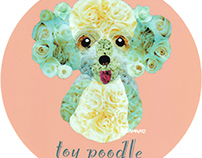 045 | Toy Poodle (Rose)