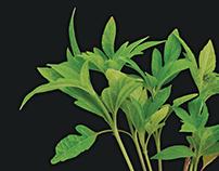 FMC Solstice Herbicide