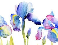 Watercolor floral background, Beautiful irises.