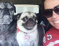 Ashford & Pugs