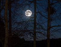 Wolf moon Jan 1, 2018