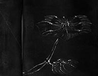 död blomma