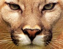 Campaña contra el Tráfico Ilegal de Fauna Silvestre