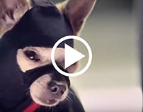 Ninja Chihuahua - Pick up