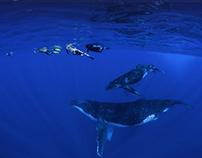 Site internet : WHALES WATCHING TAHITI