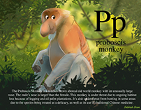P is for Proboscis Monkey