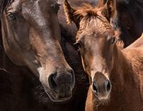 Babbitt Ranches Annual Colt Sale