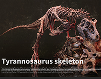 Tyrannosaurus skeleton making