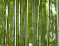 Abstract Bamboo