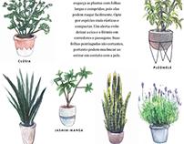 40 Plantas | Revista Casa & Jardim