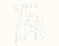 Orchids illustrations
