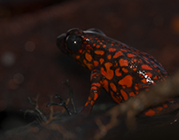 Poison Frog series