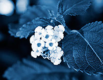 Cyanotype Photography [pt.29]