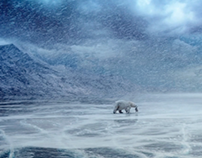 Storytelling/Animals/VFX. Polar Bear Beer.