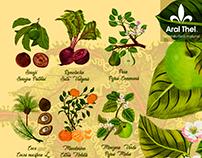 Plantas Ilustradas