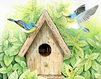 Bird watercolor paintings