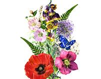 Nabil Nezzar - Botanical Drawing