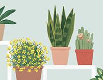 Plantas para El Mueble