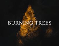 BURNING TREES / DOLOMITES, ITALY