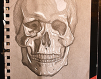 Skull on Toned Paper