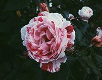 Flowers Pt. VII