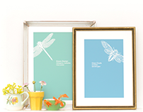 Decorative prints of my own insect illustrations, 2013
