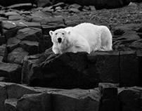 Whatcha looking at? (Polar Bear in Svalbard)