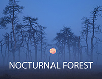 Nocturnal Forest