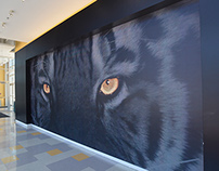 Towson University | Athletics
