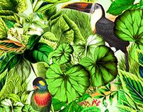 MORENA ROSA BEACH: Estampa Botanica (Botanical Pattern)