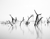 Ghost Trees Of Lake Baringo