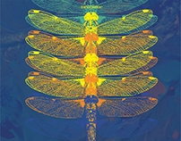 Dragonfly - cd cover
