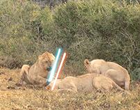 Safari Link - Cat videos