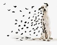 Black&Decker:Dalmatian