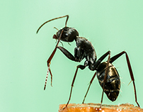 Ant Macro Photography