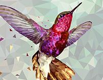 Hummingbird Fractal